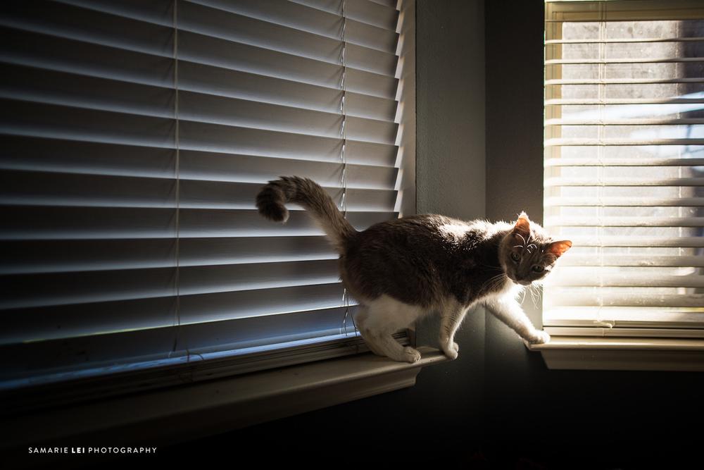 February-favorites-houston-family-photography-3.jpg