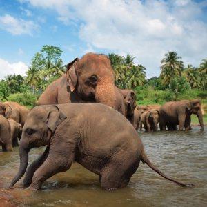 tale-blog-srilanka-gezginiz.jpg