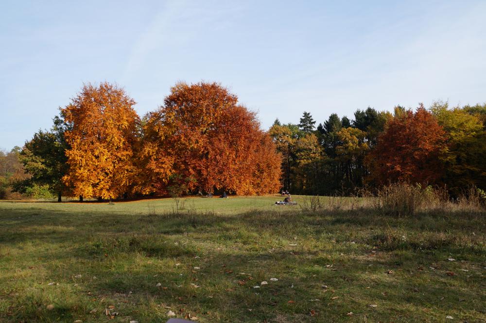 Wiese Bäume 2.jpg