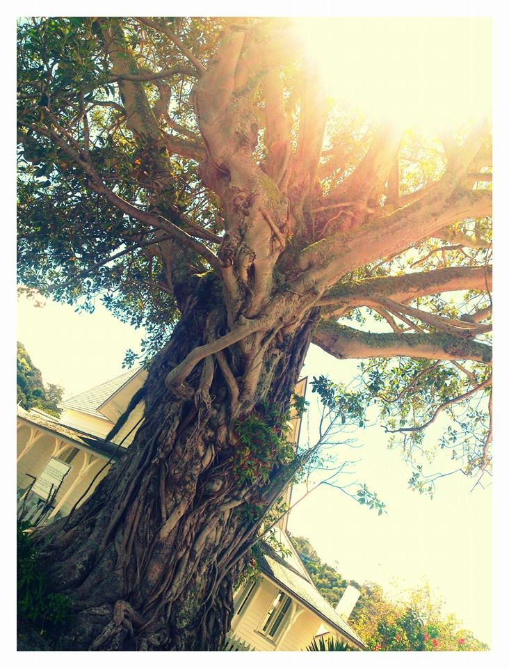 A gorgeous old tree on the Waterfront