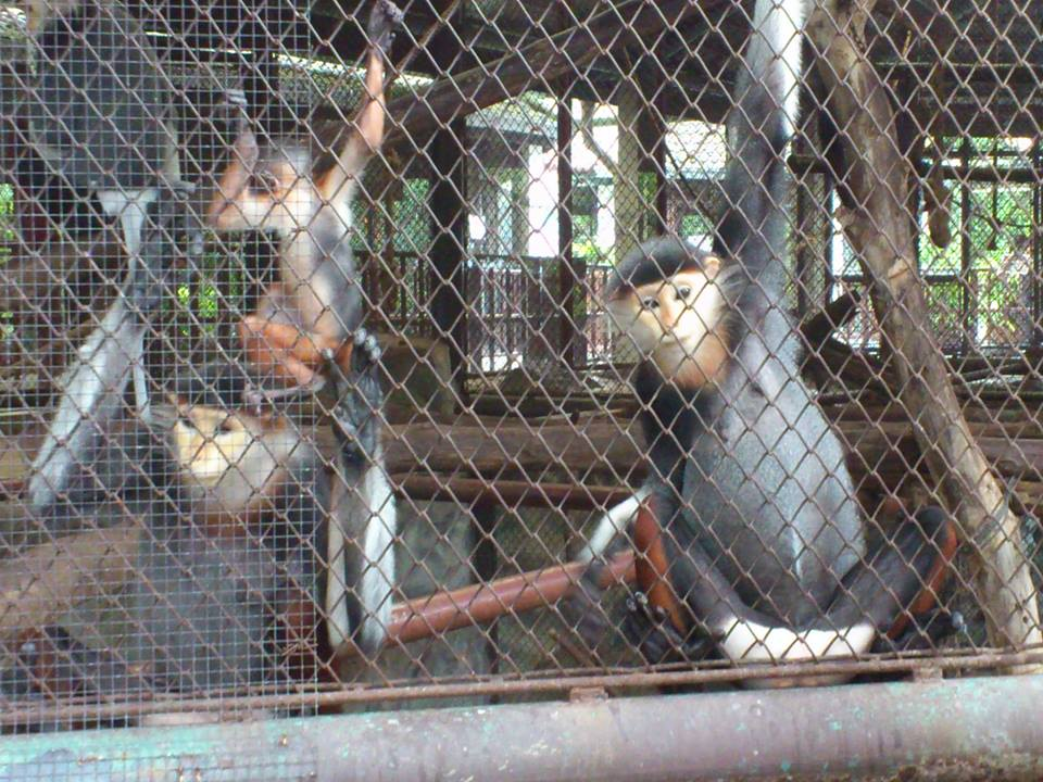 Dusit  Zoo Inhabitants