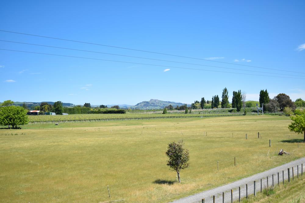 Te Mata Peak in the distance