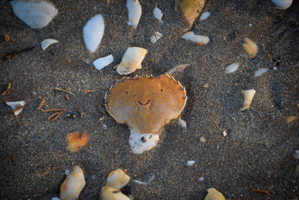 The happiest dead crab you've ever seen!