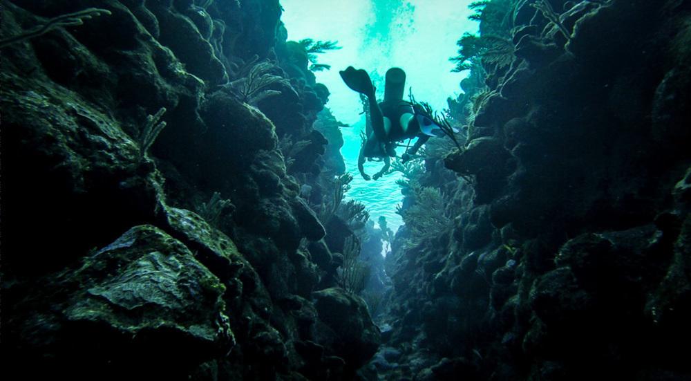 Diving Honduras
