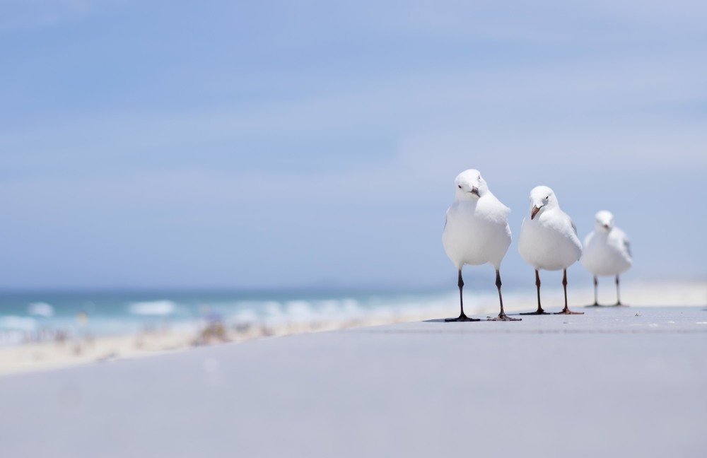seagulls by the beach