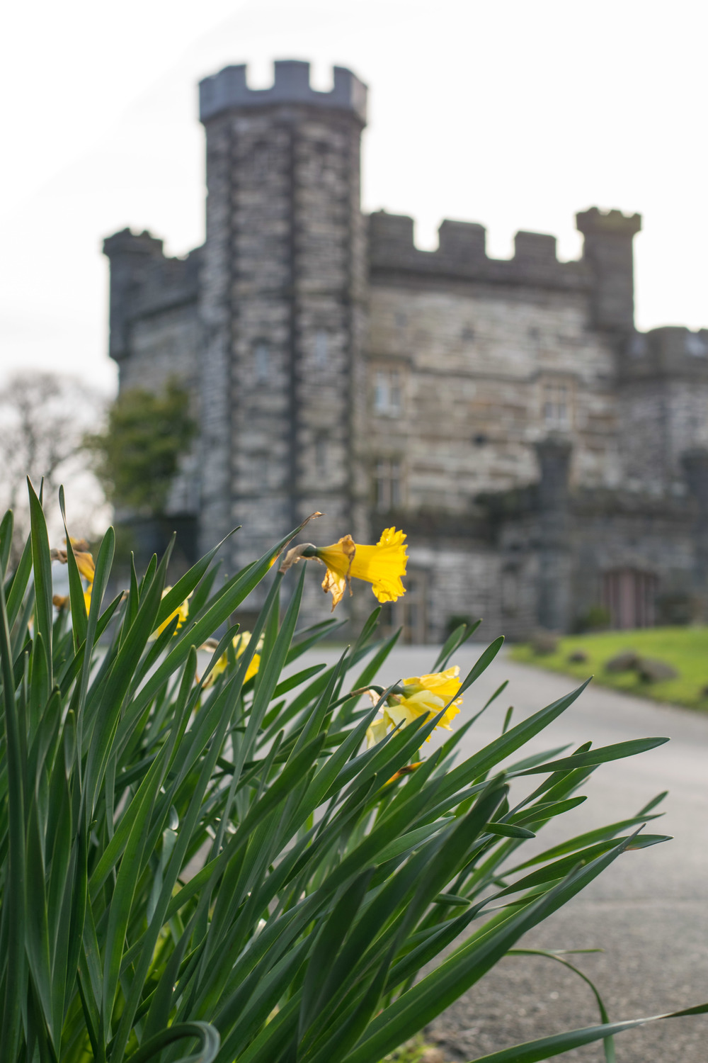 UK Spring, welsh castles, daffodils
