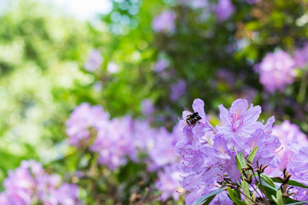 Flowers in Sefton Park