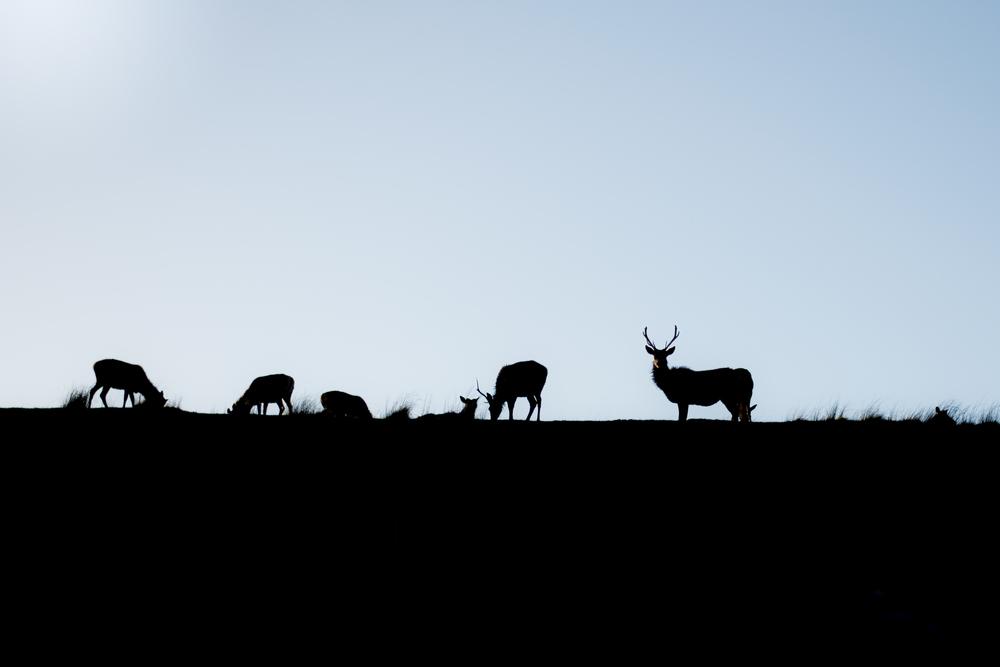 deer in loch ness, scotland