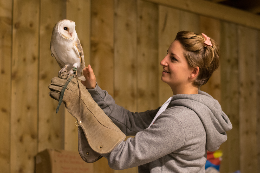 Alan the Barn Owl, Rosliston Forestry Centre, Evening with Owls