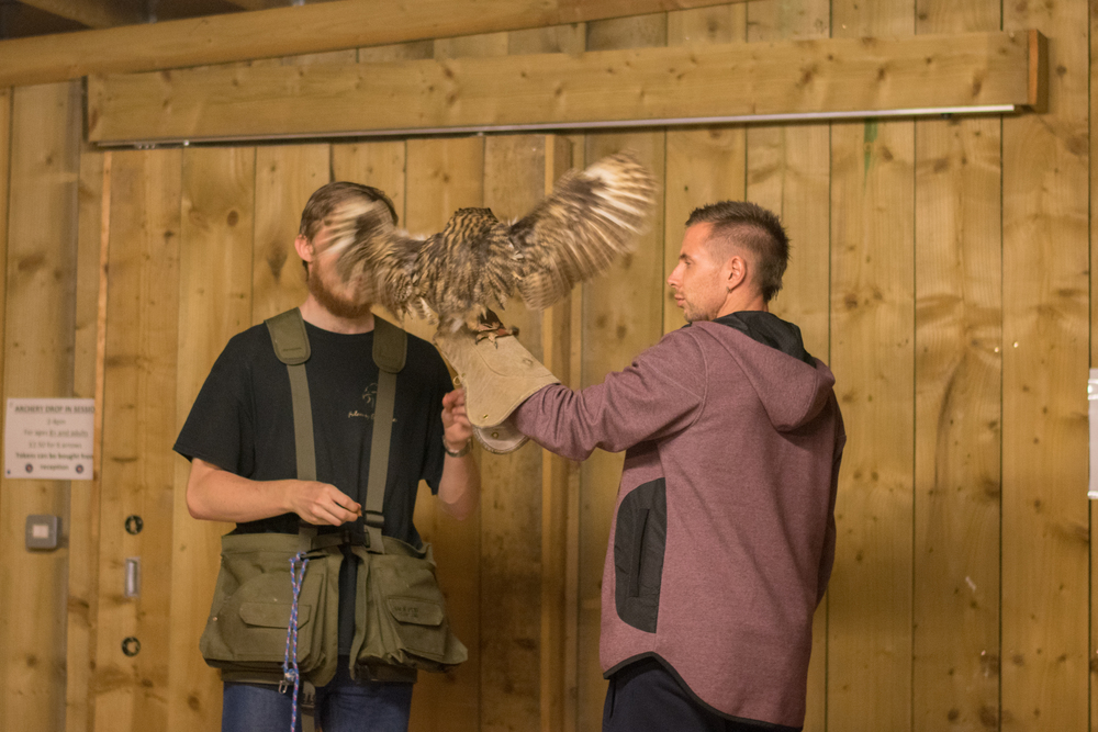 Gomez the Mexican Striped Owl, Rosliston Forestry Centre, Evening with Owls