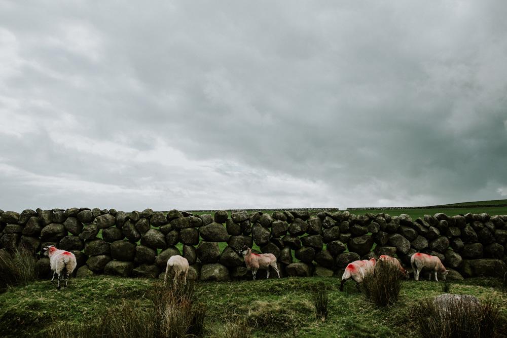 IrelandBlog072.jpg