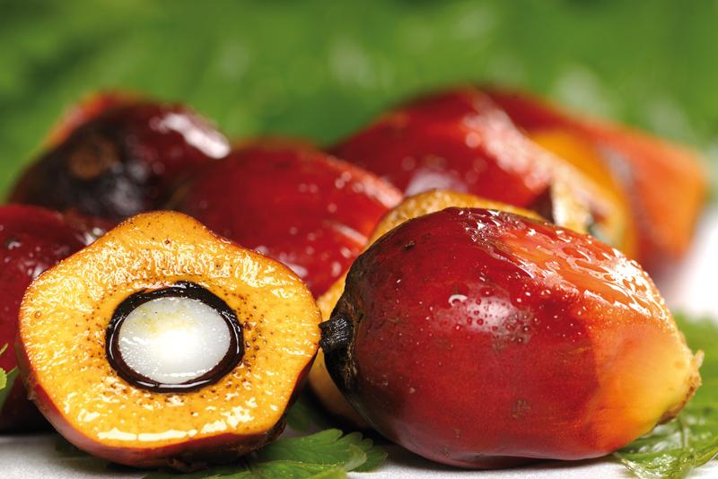 L'huile de palme, un produit naturel