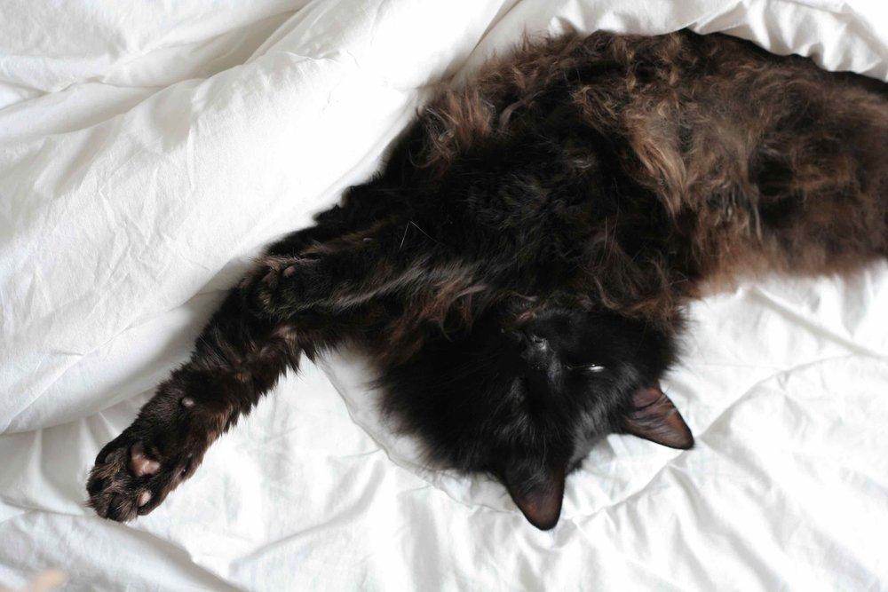 litiere chat zero dechet