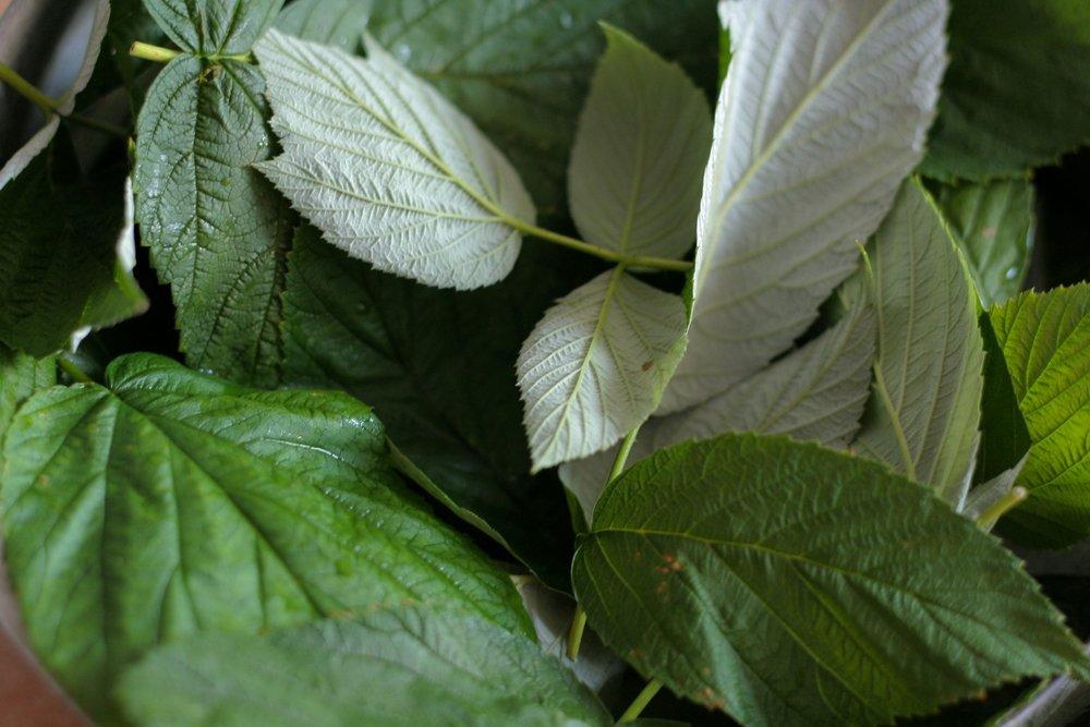 feuilles-framboisier-enceinte