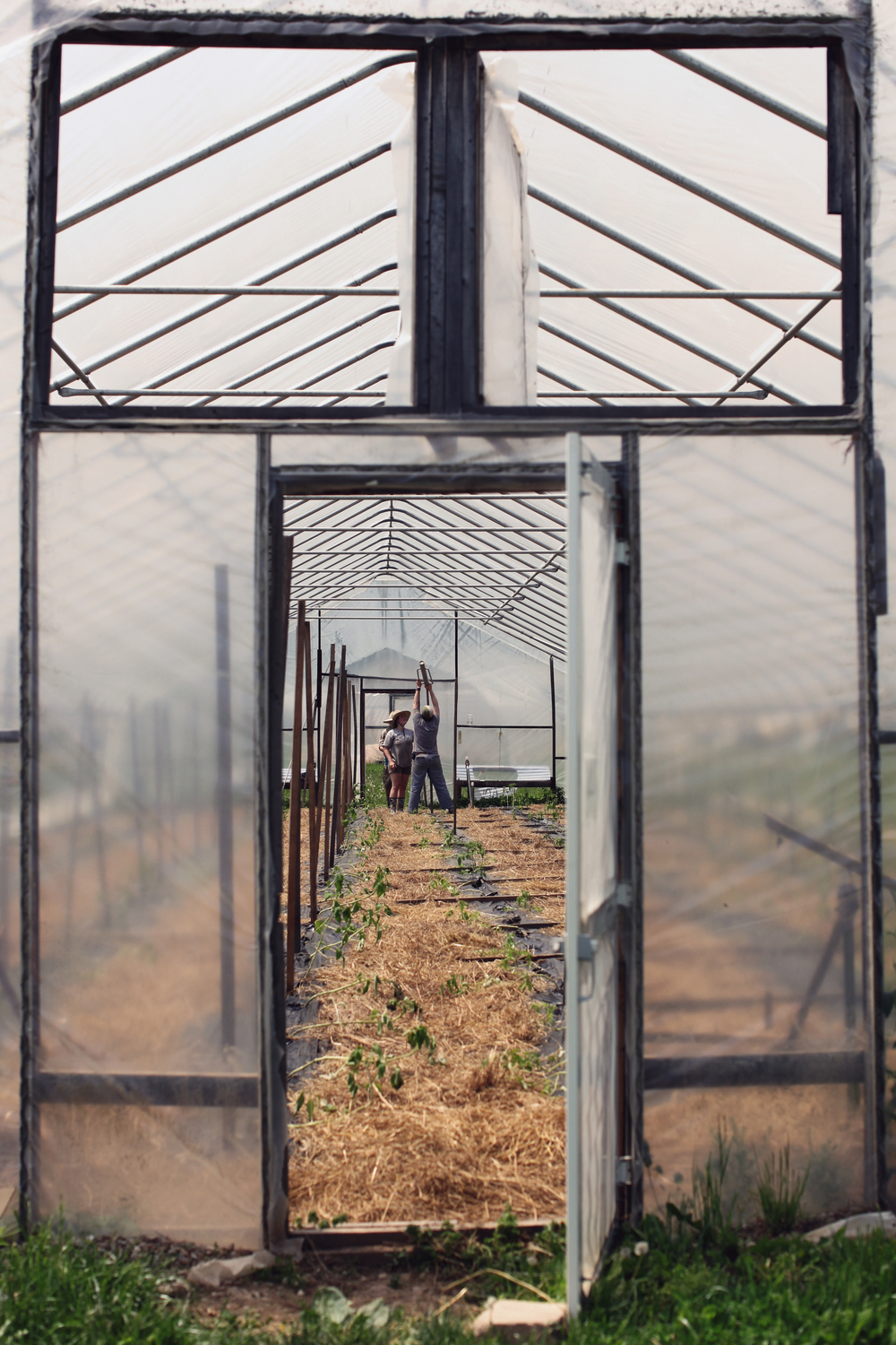 Interns Keely Hultz and Grace Kroeger drive in tomato stakes in one of the farms many high tunnels