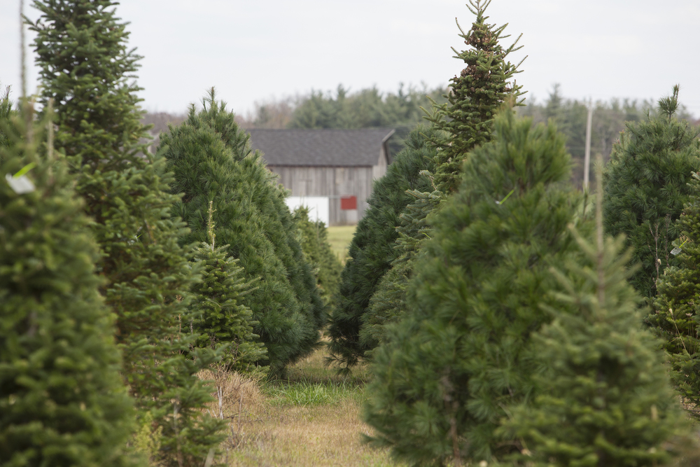 """""""Our oldest daughter was 7 when we planted our first trees,"""" Bill recalls. """"She was a sophomore in high school before the farm showed a profit."""""""