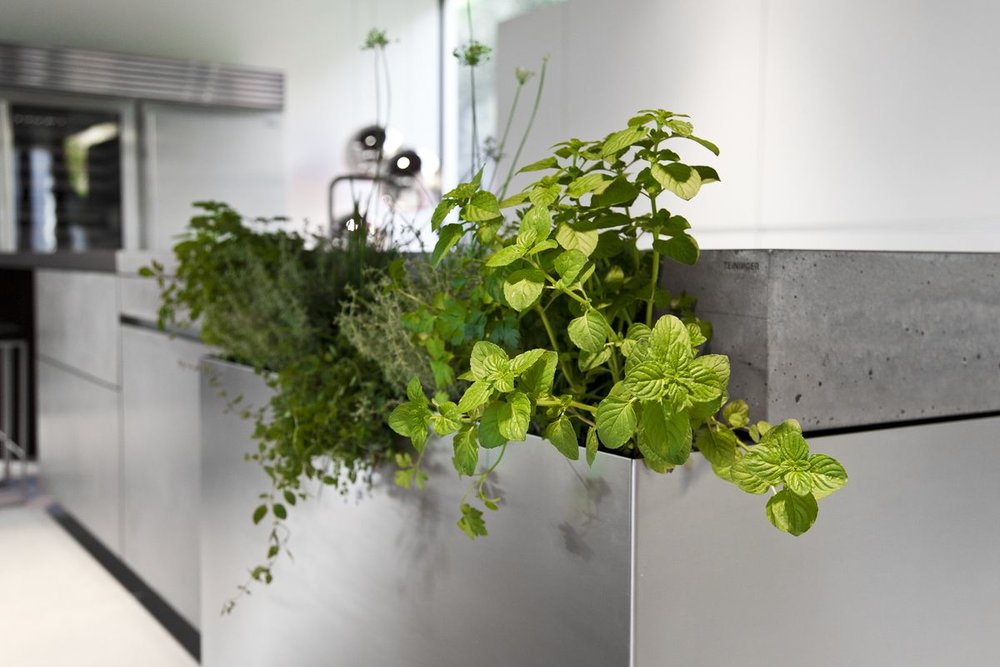 Herb storage kitchen.jpg