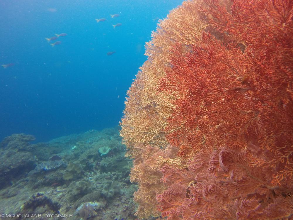 Underwater-0406.jpg