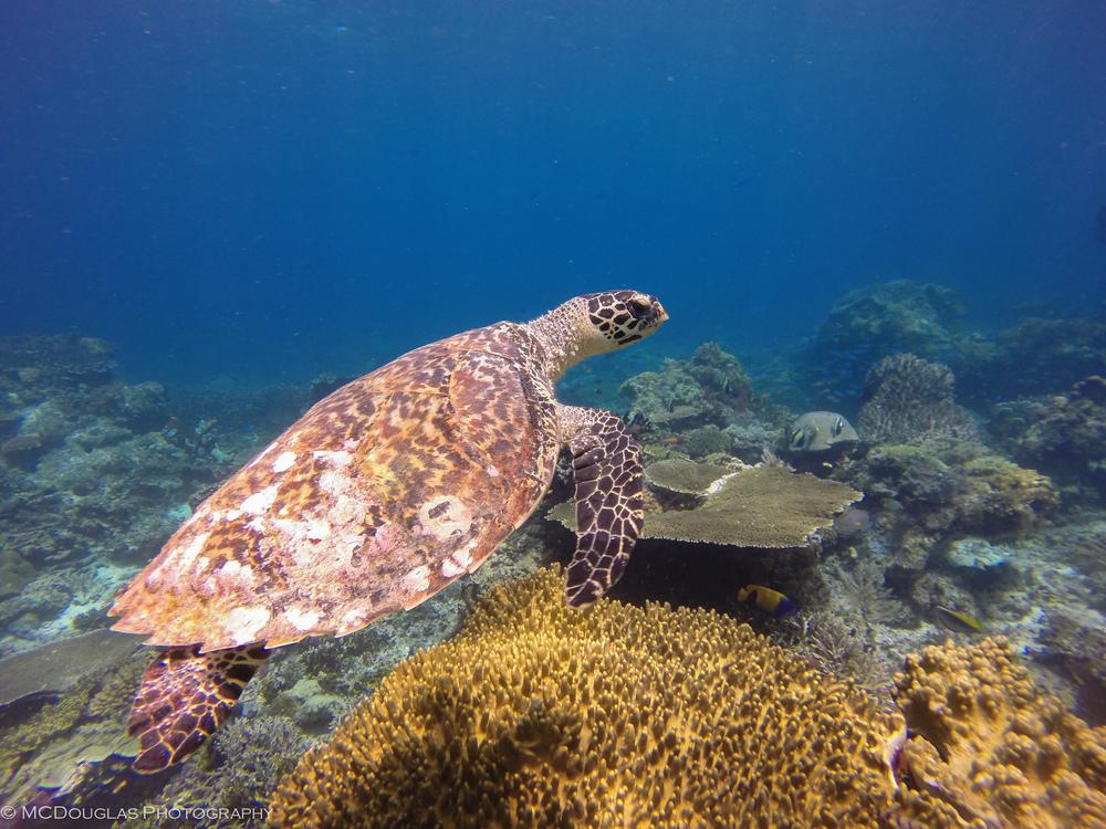 Underwater-0502.jpg