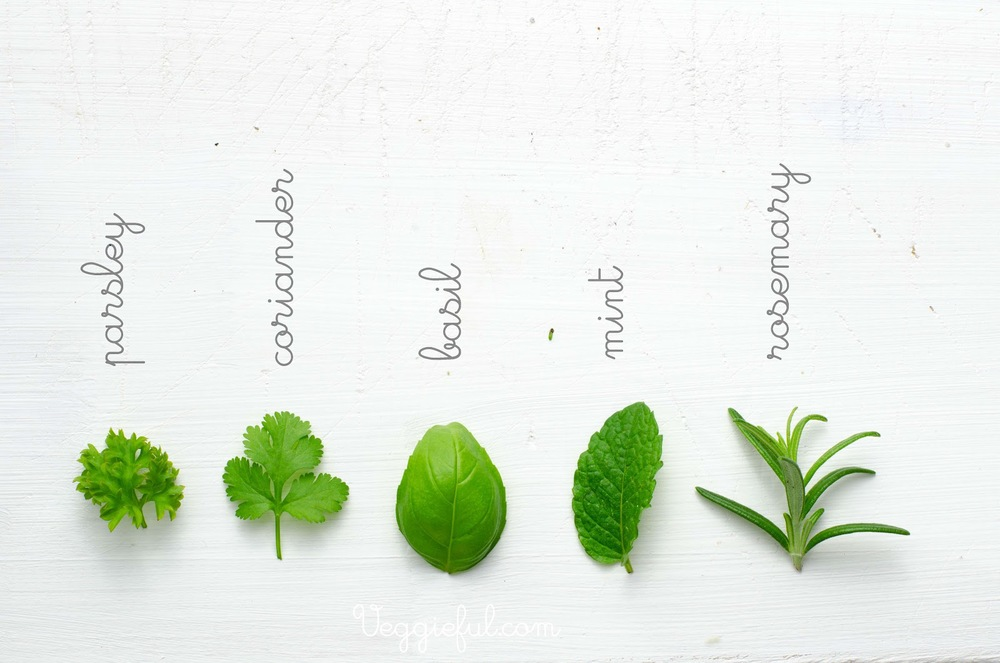 herbs-explained.jpg