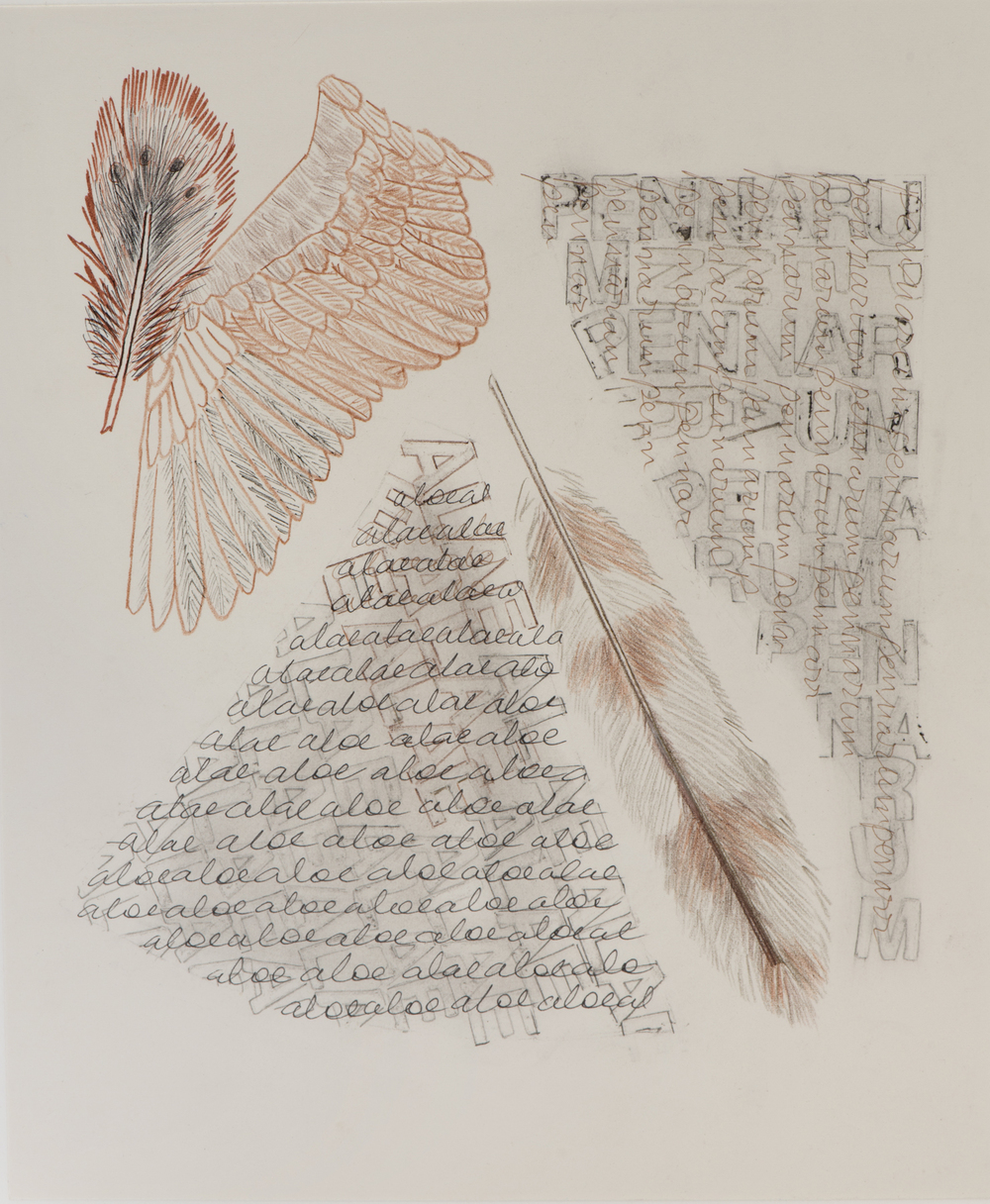 5 Book page with palimsest text and wing, feathers, drawing.jpg