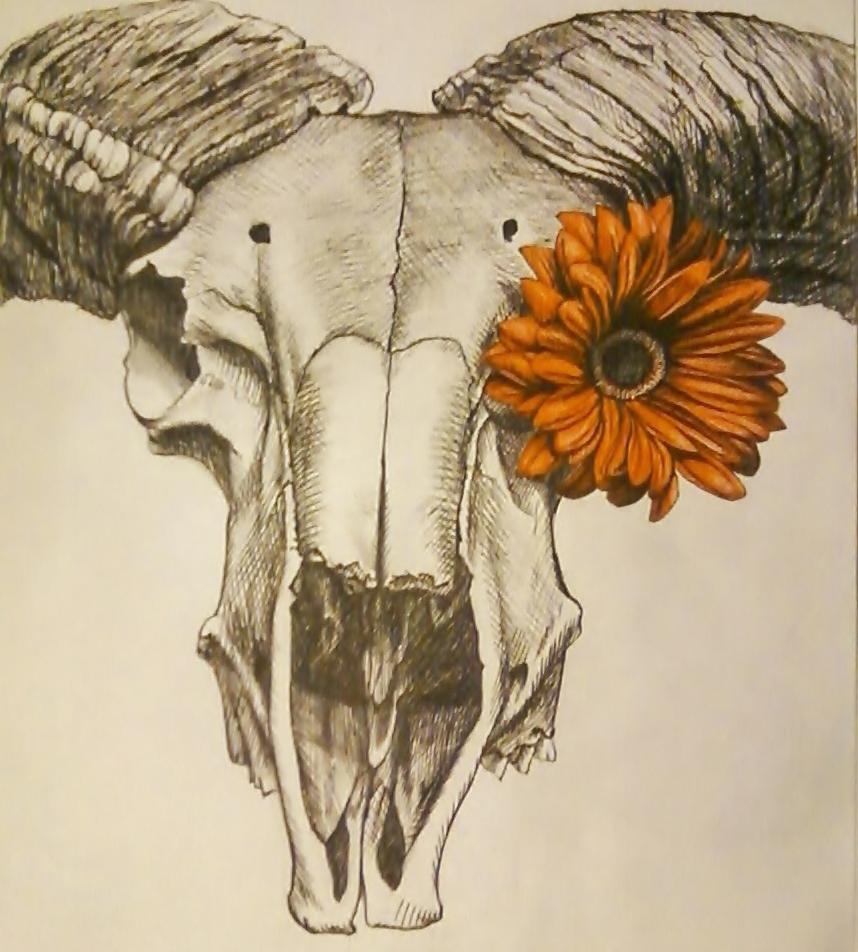 """""""Ram Skull With Daisy"""" 12""""x15"""" Pen $250"""
