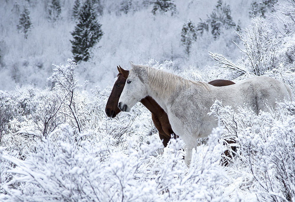 """""""Snowy Range"""" 13x19 with 18x24 Mat Professional Signed Artist Print on Lustre Paper $175"""