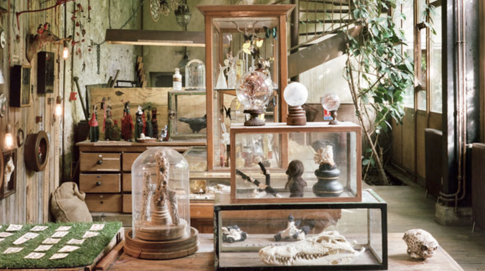 Cabinet of curiosities in Paris