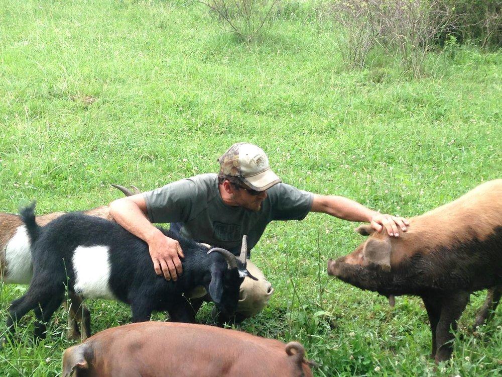 peter_allen_livestock