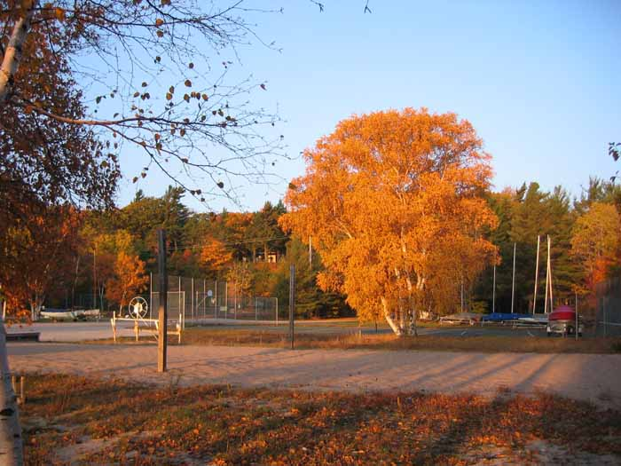 Birch11-2-05.jpg