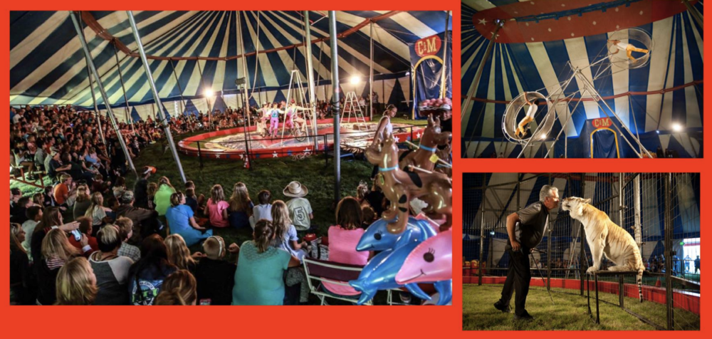 The Culpepper & Merriweather Circus is coming to Spring Grove, MN on August 1st! Two shows will be performed under our old-fashioned Big Top! Location: Next to Spring Grove Swimming Pool Showtimes: 5:00 & 7:30 (90 minute run time each show)  Sponsor: Spring Grove Syttende Mai Tickets: Tickets can be purchased at a discounted price ($10 for adults and $7 for children and seniors) before circus day from... **Red's IGA in Spring Grove** **Elsie's in Caledonia** **Merchants Bank in Spring Grove & Caledonia** **BP Gas Station in Mabel & Houston** **  https://squareup.com/store/culpepper-and-merriweather-circus  ** You can also call 1-866-BIGTOP-6 during regular business hours for discounted will call tickets. On circus day, tickets can be purchased at the box office and will be $13 for adults and $8 for children 2-12 and seniors 65 & up. No charge for children under the age of 2. Buy your tickets early and save! A portion of the proceeds will go to support our sponsor -- the Spring Grove Syttende Mai! Our 90 minute family-friendly show features Big Cats, unicyclists, dogs, trapeze, the Wheel of Destiny, high wire, contortion and so much more! Visit  cmcircus.com  to see photos and find out more information on this year's show.