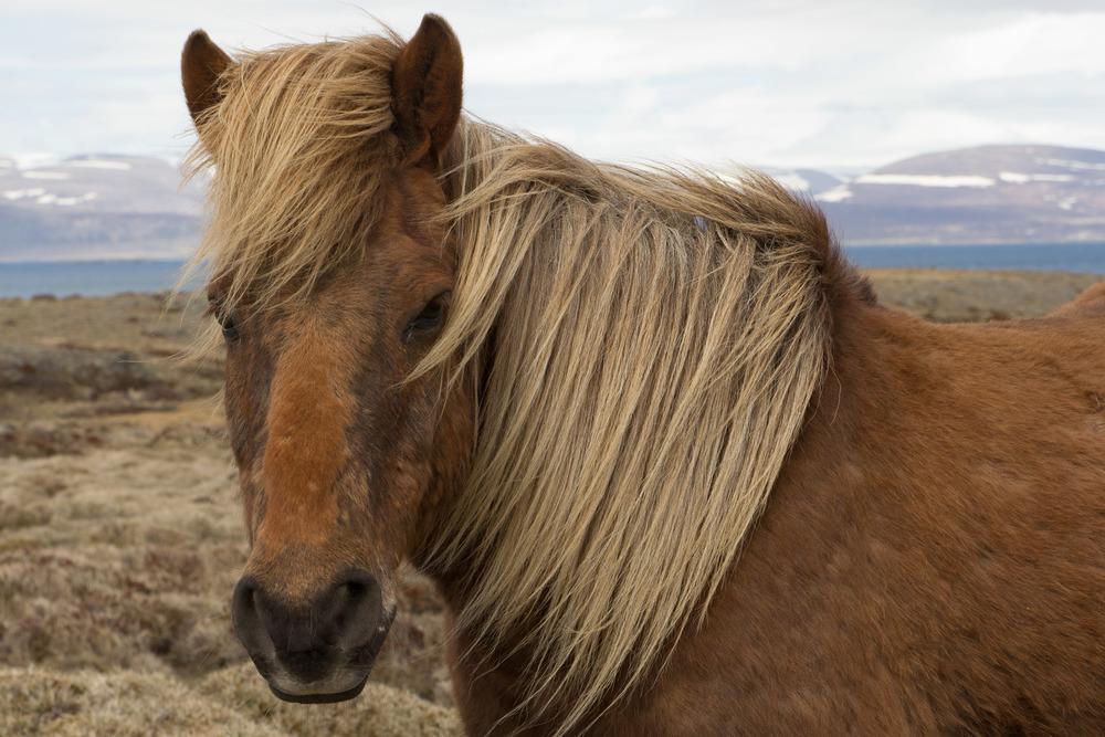 Iceland (11 of 40).jpg