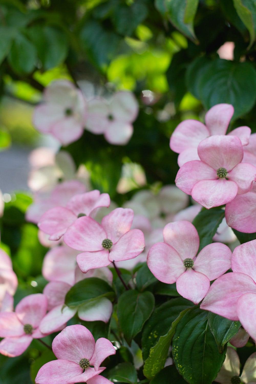 flowers - portfolio (1 of 1)-2.jpg