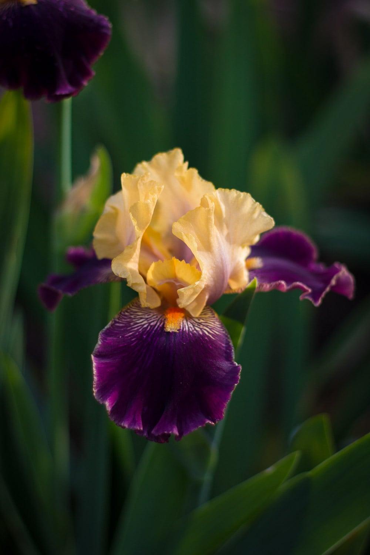 flowers - portfolio (1 of 1)-3.jpg