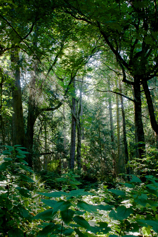 trees - portfolio (1 of 5).jpg