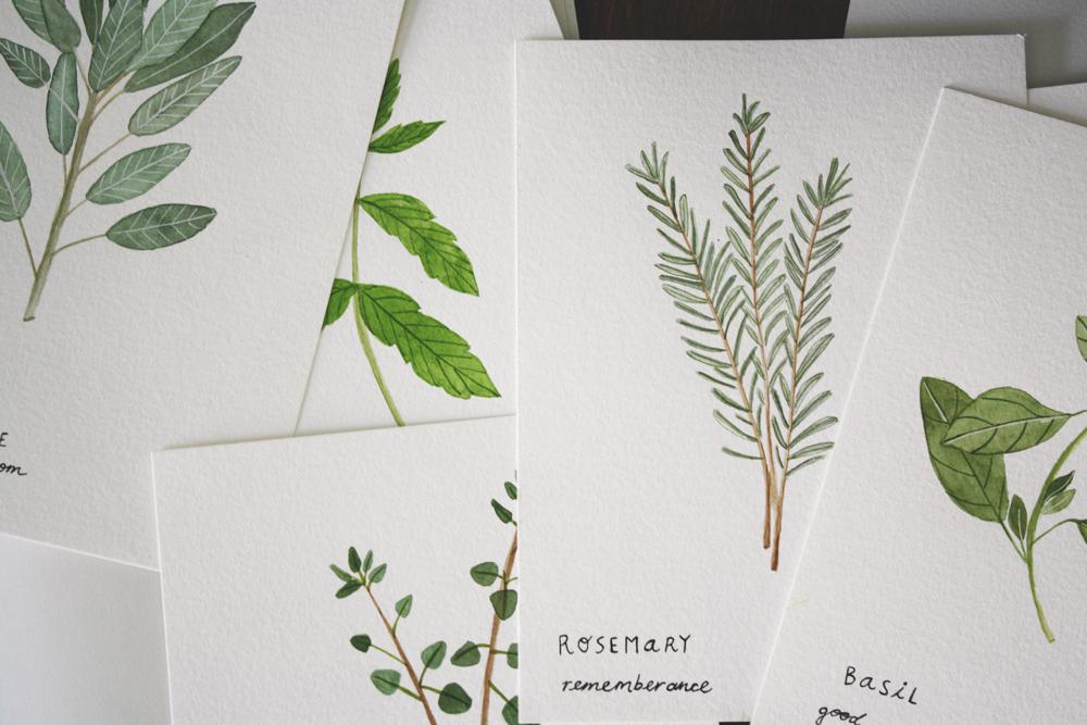herb-illustrations