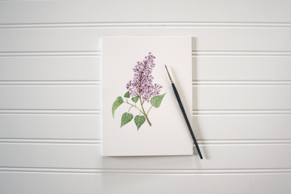 Lilac Illustration by Jenni Haikonen.jpg