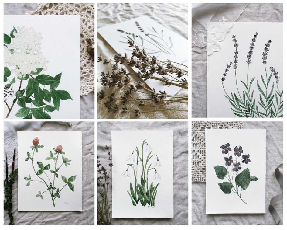 Jenni Haikonen Botanical Paintings