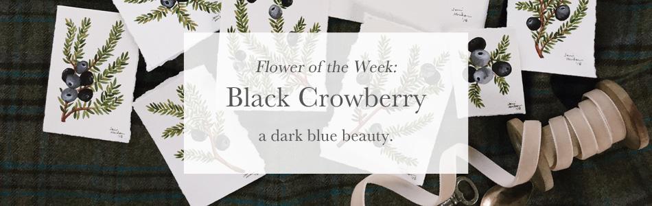 9- Black Crowberry Product Photo.jpg