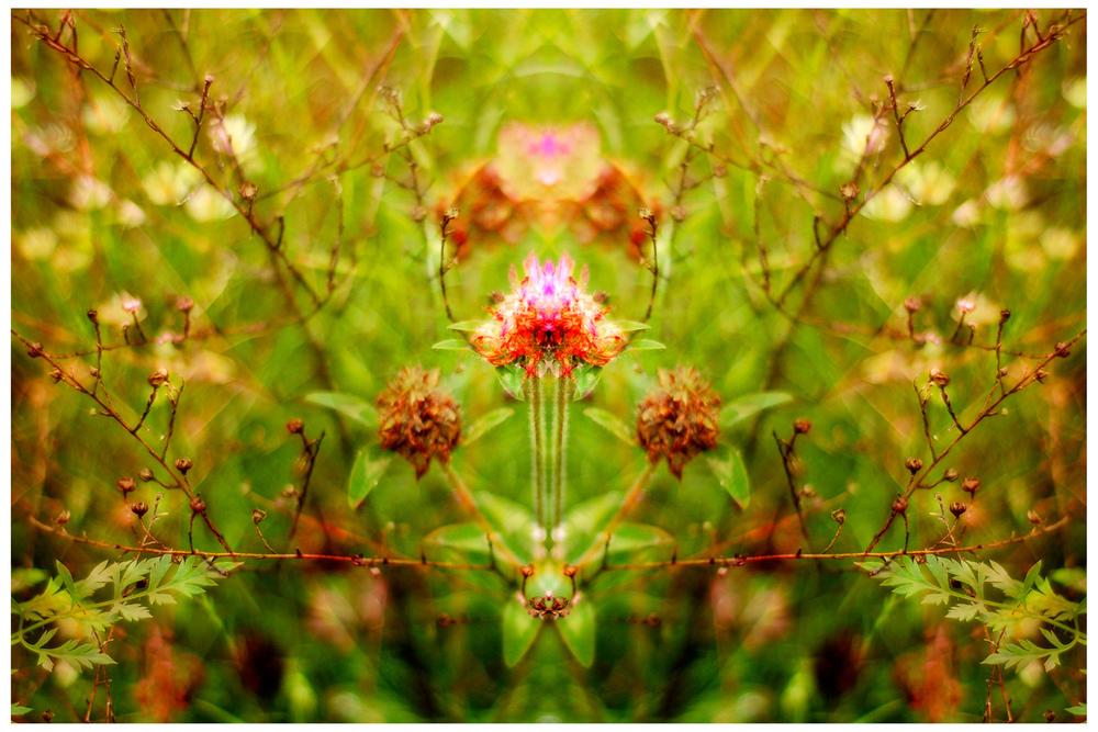 DSC_1904mpix-1500px.jpg