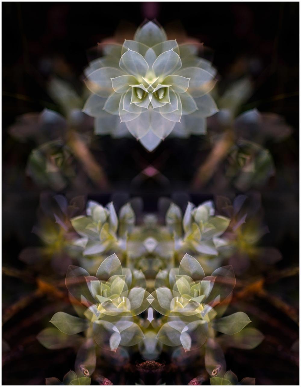 DSC_6892mpix2-Edit-1500px.jpg