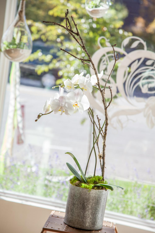 Blooms&Co--6894.jpg