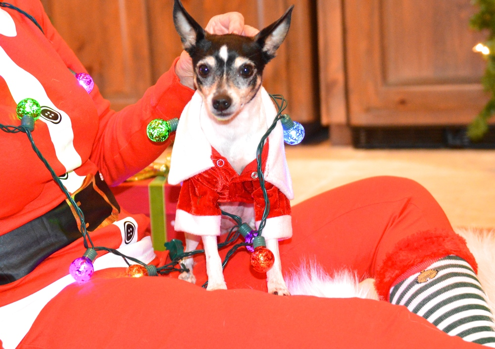 A Gift Guide For Your Furry Friend