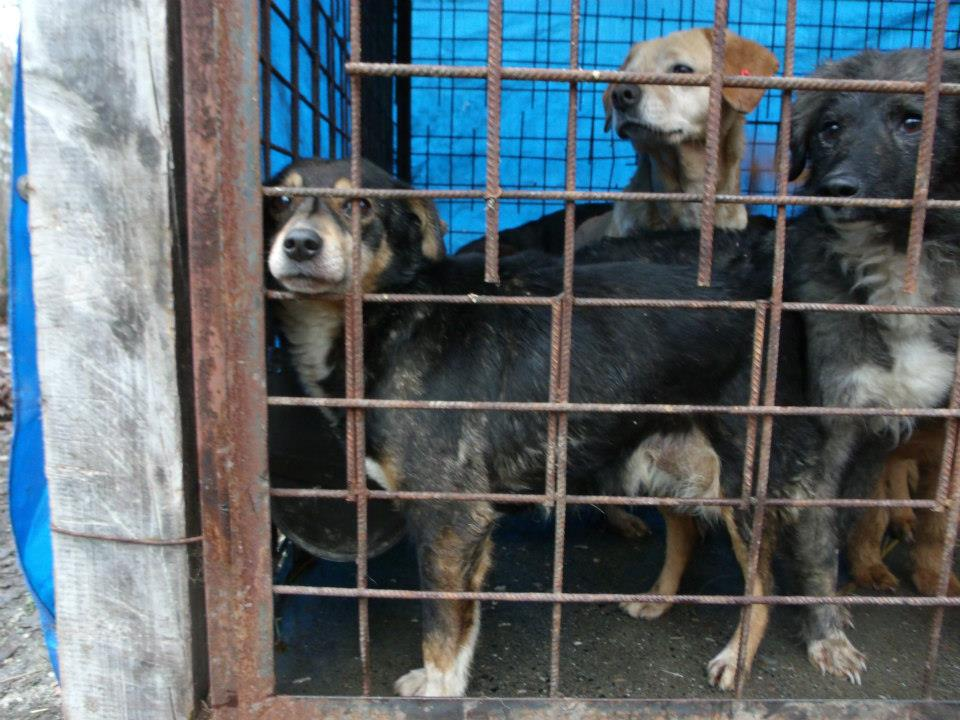 Strays suffer deplorable conditions in government-run shelters.