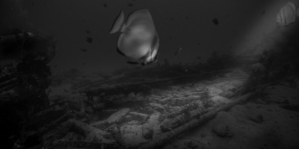 Batfish over Sabang Wreck Sabang In Black And White