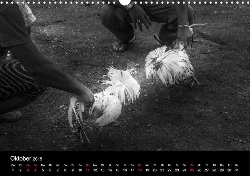 """Kalender """"Philippinen - Licht & Schatten"""" - Hahnenkampf"""