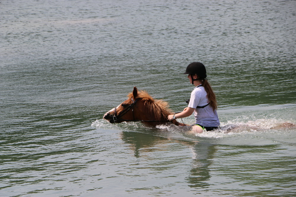 Swimming Horse - Week 3.JPG