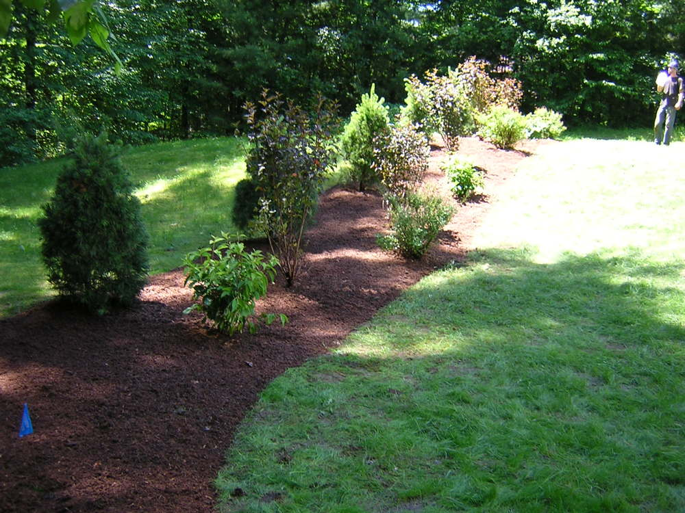 Grass roots landscaping arborvitae planting in belchertown workwithnaturefo