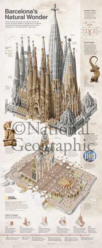 Barcelona's Natural Wonder  - National Geographic Magazine (centerfold) Collaboration with Lead Scientific Illustrator, Fernando Baptista Illustration describes Antoni Gaudi's detailed, biomimetic architecture Medium: Graphite, traditional water media, and digital © Aoki Science Art | Anatomize.ca