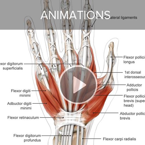 Aoki_anatomize_homepage_buttons-2.jpg